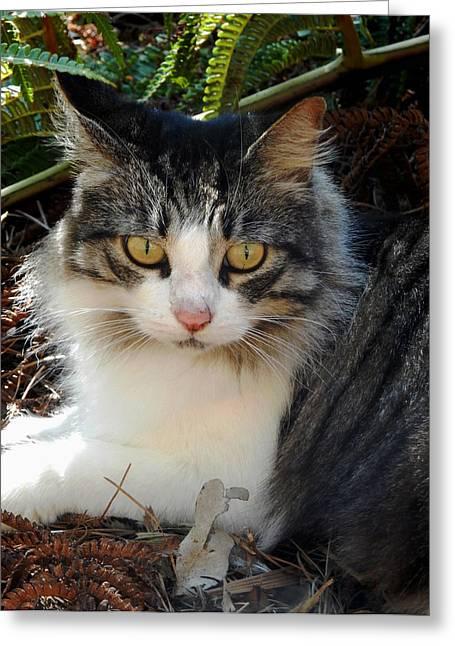 Fluffy Cat Greeting Card by Pamela Walton