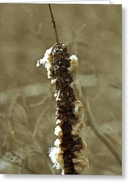 Fluffy Cattail Greeting Card