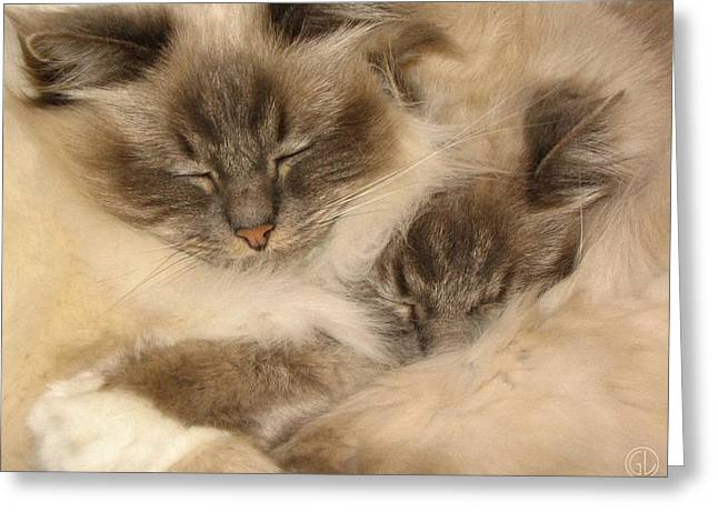 Fluffy Duo Greeting Card by Gun Legler