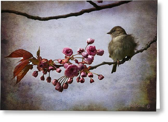 Fluffy Sparrow  Greeting Card by Barbara Orenya