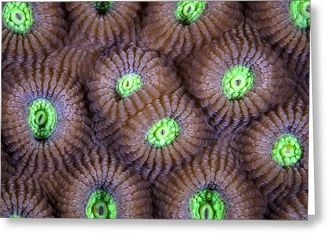 Fluorescent Hard Coral Greeting Card