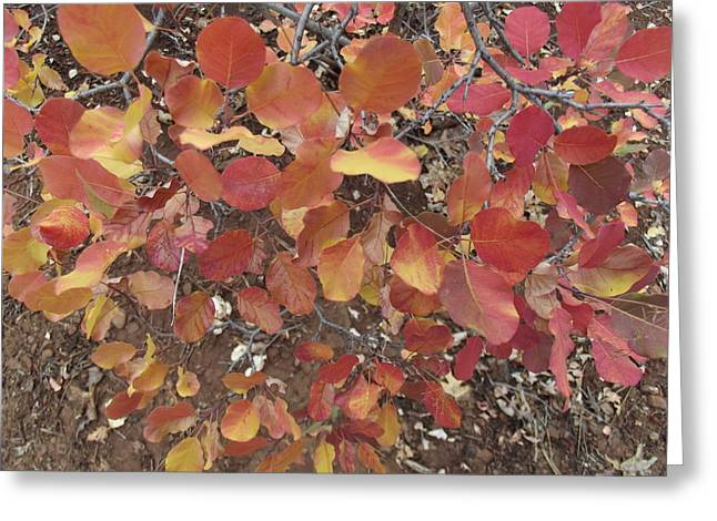 Flurry Of Colors Greeting Card by James Rishel