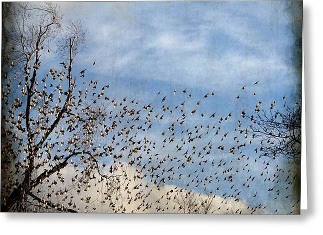 Flutter Greeting Card by Gothicrow Images