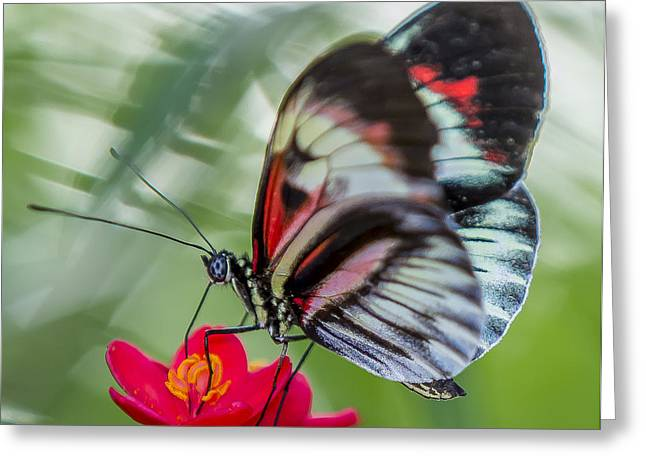 Fluttering Piano Key Butterfly Greeting Card