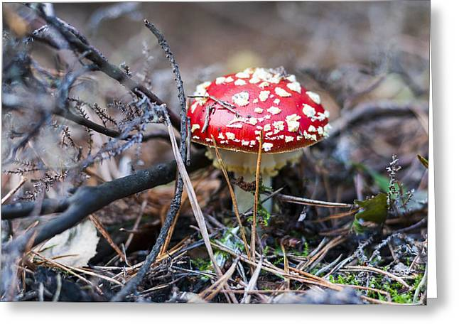 Fly Agaric Toadstool Greeting Card by David Isaacson