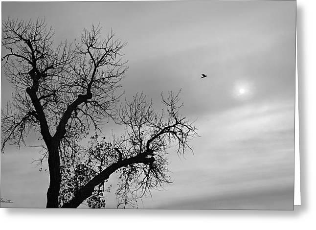Fly Away Greeting Card by Joe Bonita