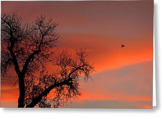 Fly Away No. 2 Greeting Card by Joe Bonita