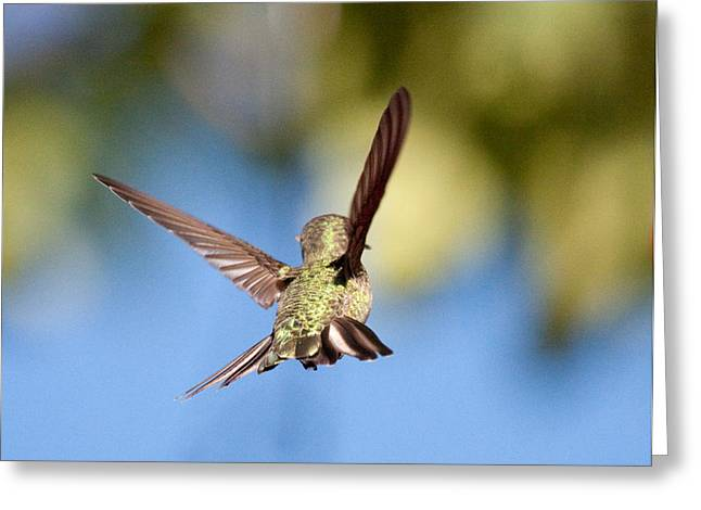 Greeting Card featuring the photograph Fly Away With Me by Nathan Rupert