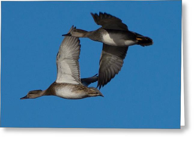 Fly By 1 Greeting Card by Ernie Echols