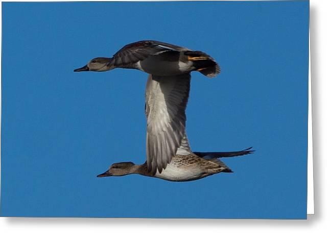 Fly By 2 Greeting Card by Ernie Echols