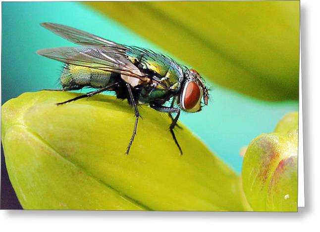 Greeting Card featuring the photograph Fly By by Cathy Donohoue