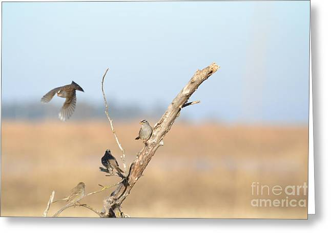 Fly Bye Greeting Card by Laurianna Taylor