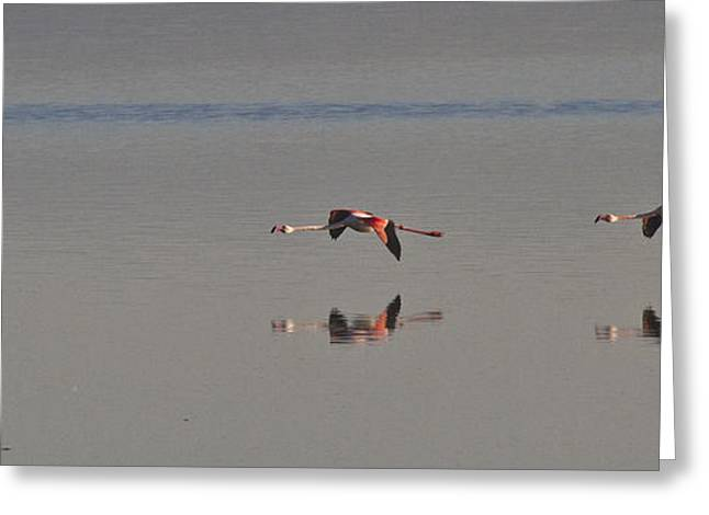 Fly Fly Away My Pretty Flamingo Greeting Card by Heiko Koehrer-Wagner