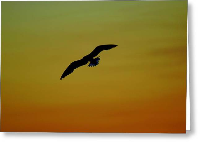 Fly High Free Bird Greeting Card by Frozen in Time Fine Art Photography