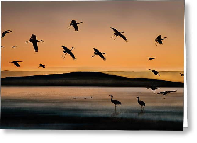 Fly-in At Sunset Greeting Card