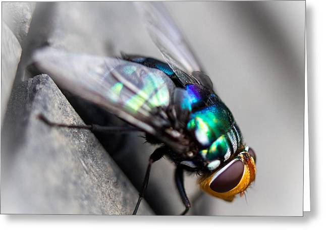 Fly On Tyre Greeting Card