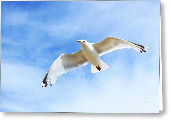 Fly With Me... Greeting Card