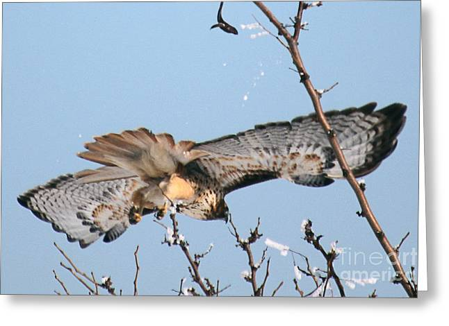 Flyby Greeting Card by Bob Hislop