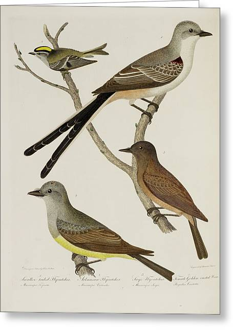 Flycatcher And Wren Greeting Card by British Library