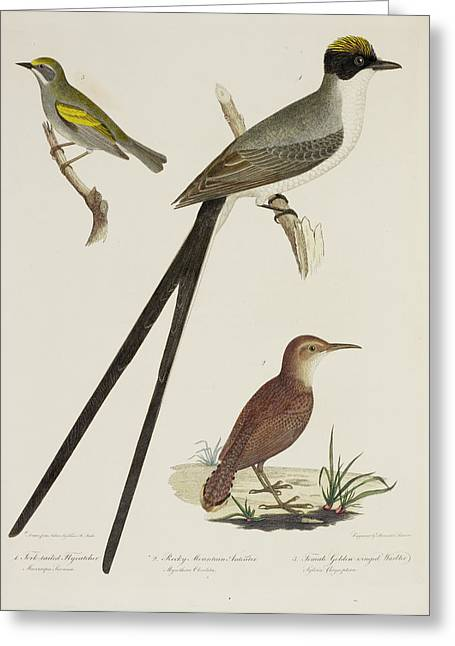 Flycather. Anteater. Warbler Greeting Card by British Library