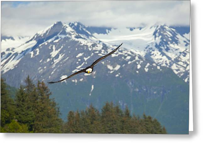 Flying Amongst The Mountains Greeting Card by Tim Grams