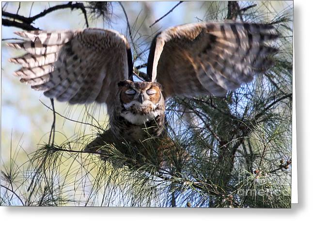 Flying Blind - Great Horned Owl Greeting Card