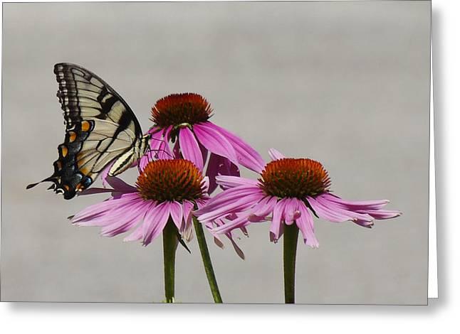 Flying Flower Greeting Card by Karen McKenzie McAdoo