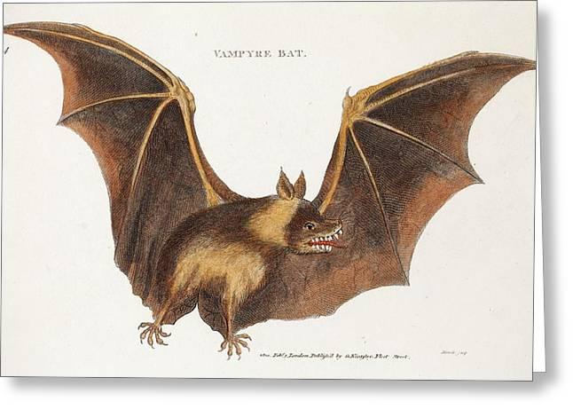 Flying Fox Fruit Bat Greeting Card