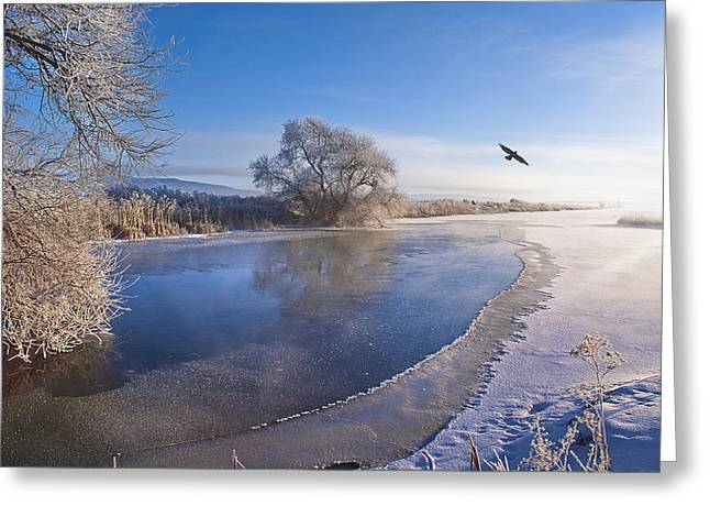 Flying Free On A Winter's Day Greeting Card