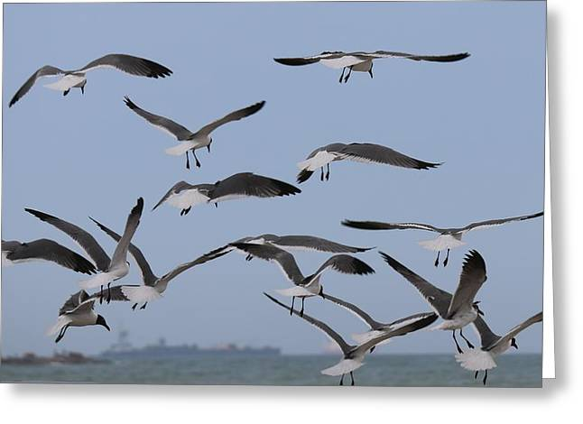 Flying Gulls  Greeting Card