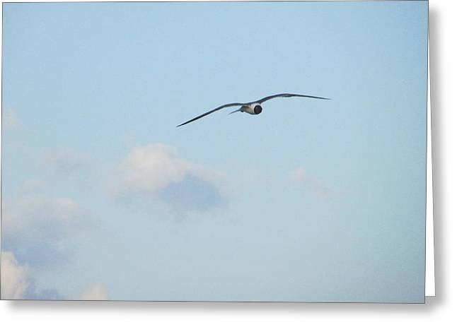 Flying High Greeting Card by Cheryl Smith