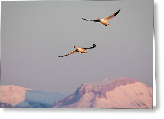 Greeting Card featuring the photograph Flying High by Jack Bell