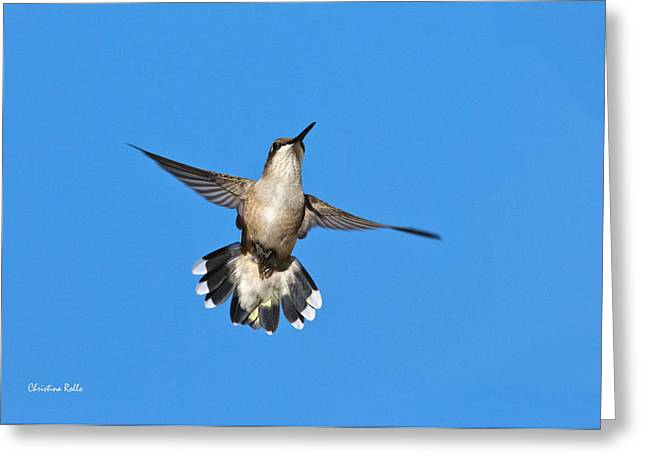 Flying Hummingbird Against Blue Sky Greeting Card by Christina Rollo