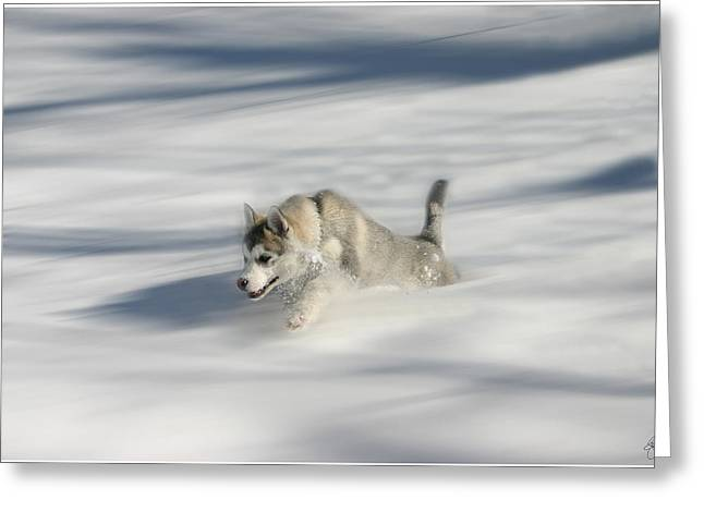 Flying In A Husky Dream Greeting Card
