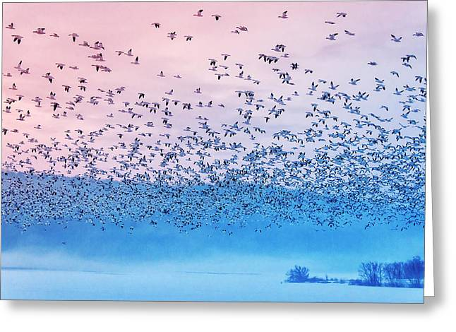 Flying In The Fogging Morning Greeting Card