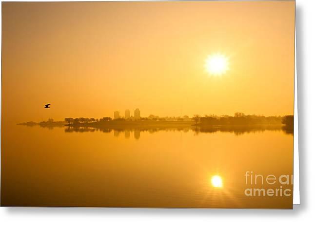 Flying In The Golden Light Greeting Card by Michael Hrysko