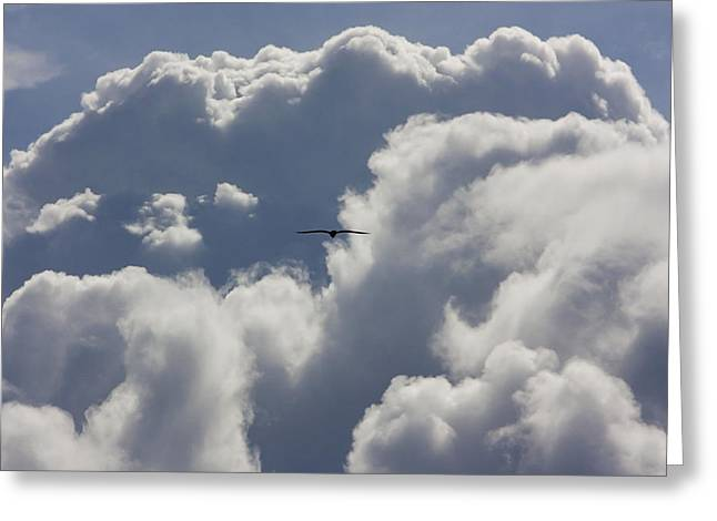 Flying Into The Storm Greeting Card
