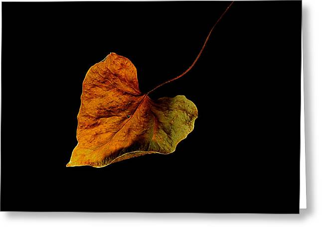 Greeting Card featuring the photograph Flying Leaf by Marwan Khoury