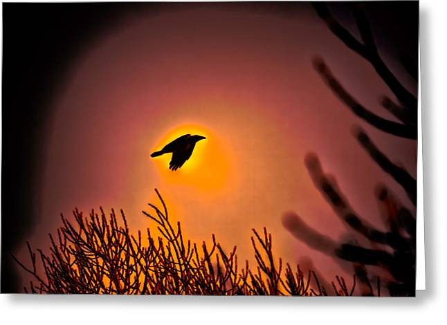 Flying - Leif Sohlman Greeting Card by Leif Sohlman