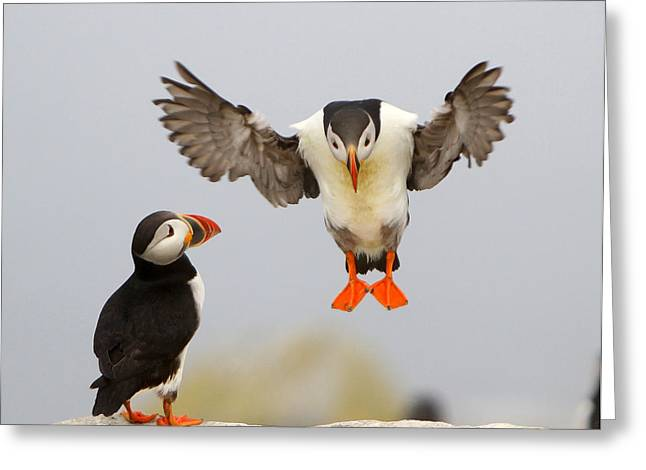 Flying Lessons Greeting Card by PMG Images