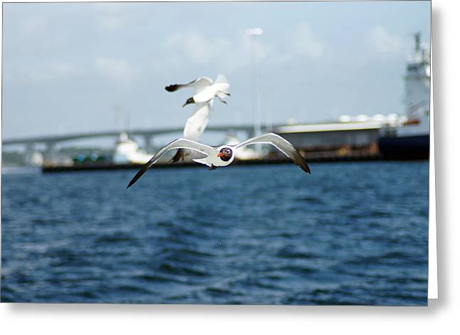 Flying Low Greeting Card by Thomas Fouch