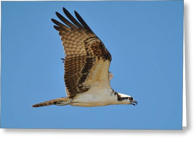 Flying Off Greeting Card