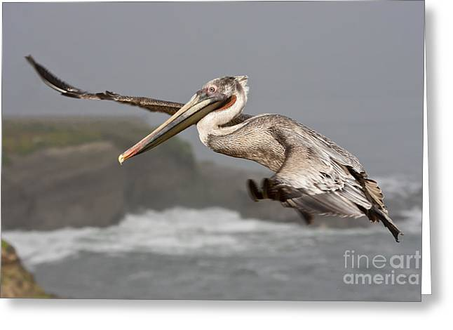 Flying Over La Jolla Greeting Card