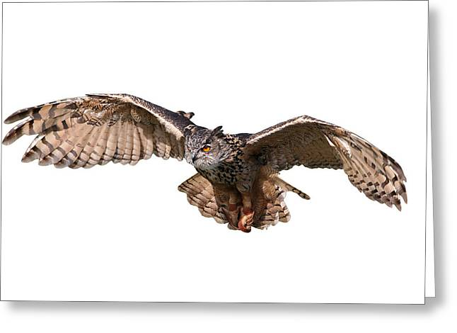 Flying Owl Greeting Card