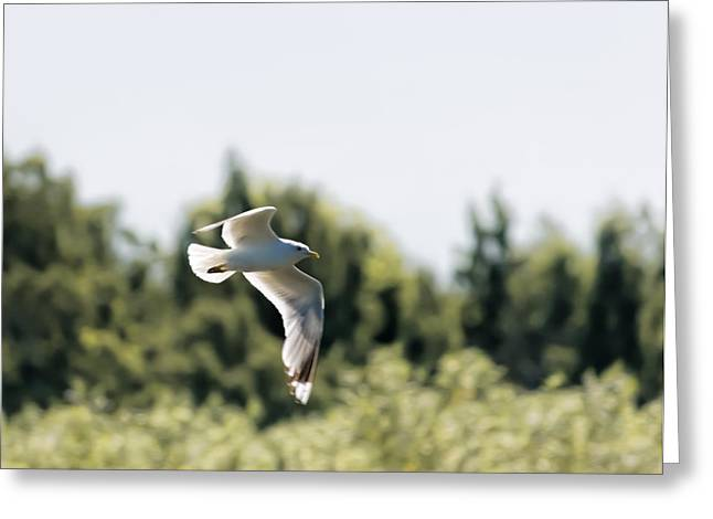 Greeting Card featuring the photograph Flying Seagull by Leif Sohlman