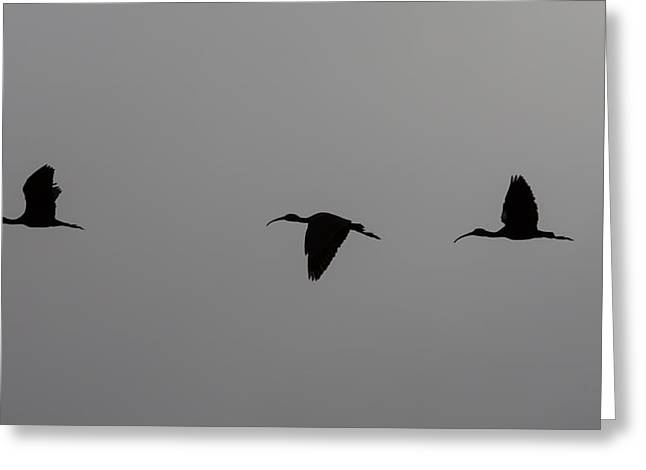 Greeting Card featuring the photograph Flying Silhouettes by John M Bailey