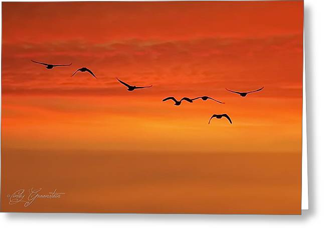 Greeting Card featuring the photograph Flying South  by Cindy Greenstein