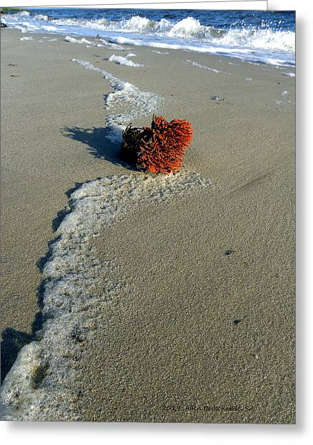 Foam And Seaweed On The Beach Greeting Card by Allen Beilschmidt