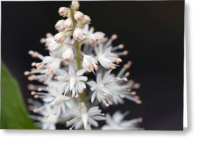 Foam Flower Greeting Card by Melinda Fawver