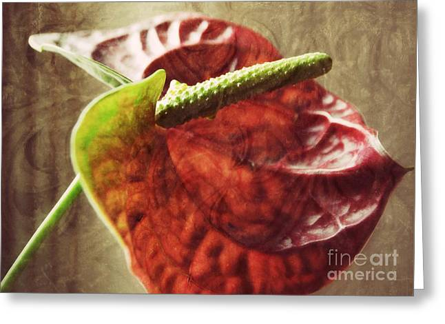 Greeting Card featuring the photograph Focal Point by Darla Wood